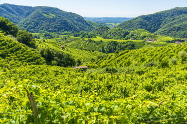 ITA15694AW europe, Italy, Venetia. The beautiful landscape of the Prosecco hills near to Valdobbiadene.