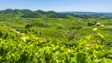 ITA15696AW europe, Italy, Venetia. The beautiful landscape of the Prosecco hills near to Valdobbiadene.