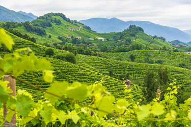 ITA15703AW europe, Italy, Venetia. The beautiful landscape of the Prosecco hills near to Valdobbiadene.