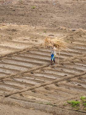 AF08MZW0079 Agriculture near Pedra Badejo. Santiago Island, Cape Verde.