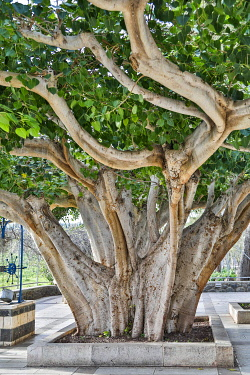 AS14HLL0099 Israel, Capernaum. Greek Orthodox Church.