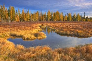 CN08BJY0468 Canada, Ontario, Wawa. Wetland in autumn.