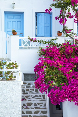 Traditional Greek home with pink bougainvillea flowers and blue windows in Oia, Santorini, Greece.