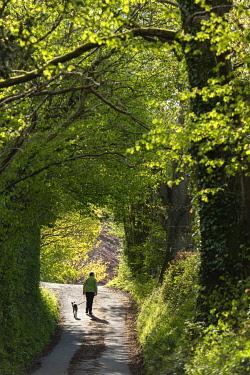 WAL7808 Wales, Dolanog, Woman walking along country lane (MR)