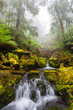 AUS4603AW Stepping Stones across creek waterfalls in Gloucester Tops. Barrington Tops National Park, Mid North Coast, New South Wales, Australia