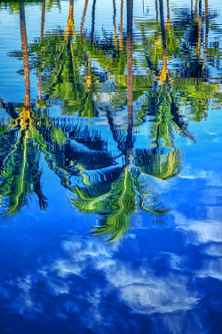 NA01LEN0708 Reflection of palm trees on water