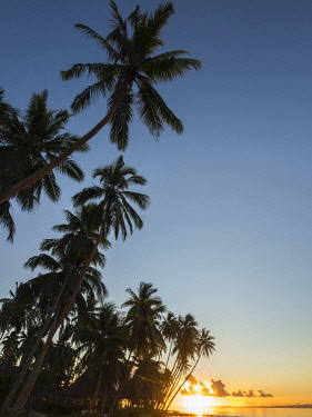 Fiji, Vanua Levu. Beach sunset with palm trees.