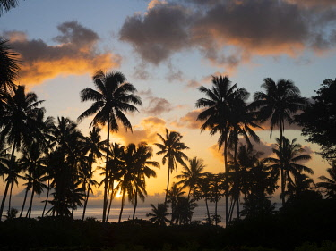 Fiji, Taveuni Island. Beach sunset with palm trees.