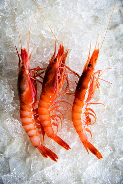 SPA10021AW Europe, Spain, Catalonia, Costa Brava, Palamos, Recently catched Palamos' Red Shrimps at Palamos' market.