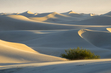 US05JWI0596 USA, California. Death Valley National Park, Mesquite Flats Sand Dunes.
