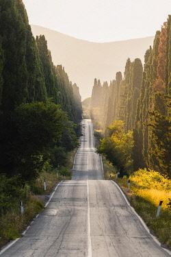 ITA16216AW Viale dei Cipressi (Cypress Avenue), Bolgheri, Livorno province, Tuscany, Italy.