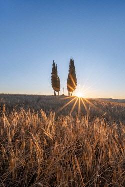 ITA16220AW Val d'Orcia, Siena province, Tuscany, Italy.