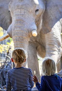 BOT5839 Camp Kalahari, Makgadikgadi, Botswana, young guests and a huge bull elephant look at each other over a low wall.