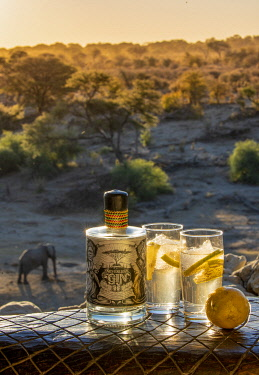 BOT5918 Botswana; Makgadikgadi; Meno a Kwena, gin and tonic in camp with an elephant in the river bed below.