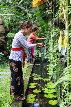 IDA1150AW Indonesia, Bali, Ubud. Local women devotees at a water temple near Ubud, MR