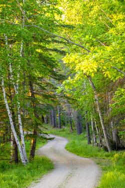 Winding dirt road through green forest, Deer Isle, Maine, United States