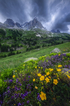FRA12075AW Wildflowers in Parque National des Ecrins, France