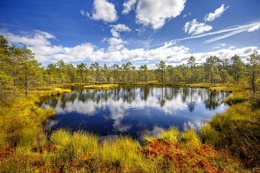IBLCNA05115921 Moor landscape with lake and cloudy sky, Knuthöjdsmossen, Sweden, Europe