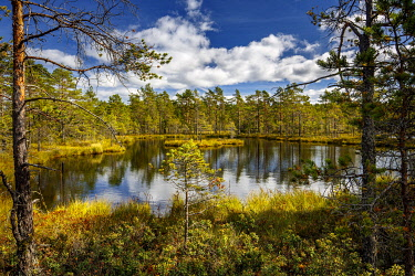 IBLCNA05115922 Moor landscape with lake and cloudy sky, Knuthöjdsmossen, Sweden, Europe