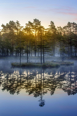 IBLCNA05115928 Moor landscape with lake at daybreak, Knuthöjdsmossen, Sweden, Europe