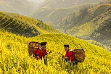 CH12546AW Yao minority ladies, Longji rice terraces, Longshen, China