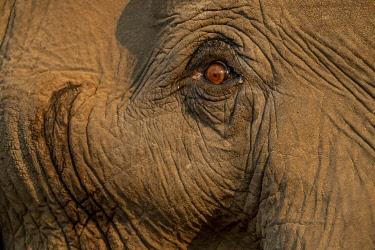 ZB01041 very close up of elephant eye, Mana Pools, Zimbabwe, Africa