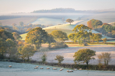 ENG18358AW Frost covered countryside at dawn, mid Devon, England. Autumn (November) 2020.