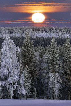 CLKMR130796 The moon light on frozen forest covered with snow, Muonio, Lapland Finland.