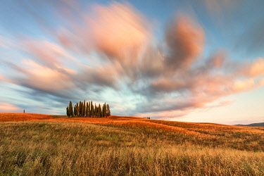 CLKCC134238 Sunset near the iconic Cypresses of San Quirico d'Orcia, Siena province, Tuscany, Italy