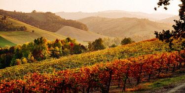 CLKFI138528 Castelvetro di Modena, Emilia Romagna, Italy. Autumn landscape with colorful vineyards and hills.