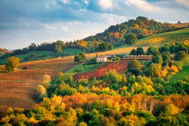 CLKFI138529 Castelvetro di Modena, Emilia Romagna, Italy. Autumn landscape with colorful vineyards and hills.