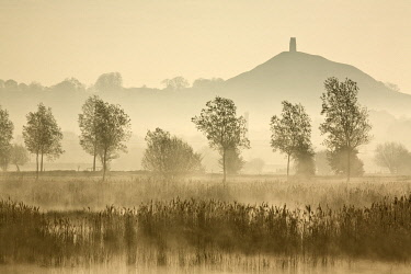 ENG18541AW Glastonbury Tor across the Somerset Levels at dawn, Somerset, England