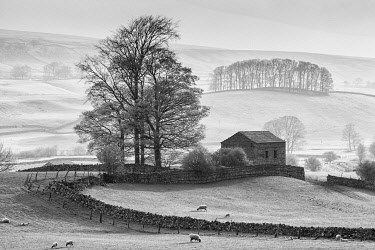 ENG18623AW Stone barn near Hawes, Wensleydale, Yorkshire Dales National Park, England