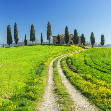 Tuscan farmhouse and cypress trees in the Val d'Orcia,near Pienza, Tuscany, Italy