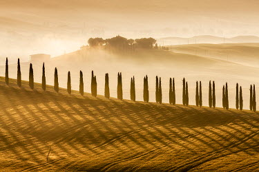 ITA16642AW Cypress trees at sunrise in the Val d'Orcia, Tuscany, Italy