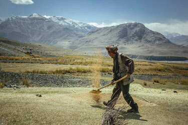 IBLFBA06032305 Man throws threshed grains of grain into the air with a shovel, he separates the chaff from the wheat, sedentary Wakhi, behind him the mountains of the Hindu Kush, Wakhan Corridor, Saradh-e-Broghil, A...
