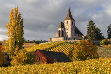 France, Grande Est, Alsace, Haut-Rhin, Hunawihr, Saint-Jacques-le-Majeur church surrounded by vines in the autumn