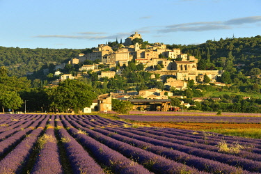 France, Provence-Alpes-Cote D'Azur, Alpes de Haute Provence, Simiane la Rotonde, lavender field at the foot of the village