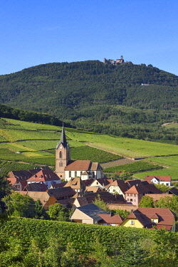 France, Grand Est, Alsace, Haut Rhin, the Alsace Wine Route, the village of Rodern surrounded by its vineyard and the Haut-Koenigsbourg Castle in the background