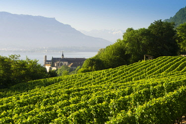 France, Auvergne-Rhone-Alpes, Savoie, Aix-les-Bains, Bourget lake, Hautecombe Abbey, in the middle of its vineyard dominates the lake and Mont Revard