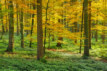 Mixed forest, Zurich Oberland, Switzerland, Europe