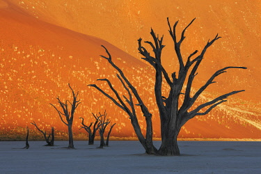 Dune impression with dead trees in Dead Vlei - Namibia, Hardap, Namib, Dead Vlei - Namib Naukluft National Park