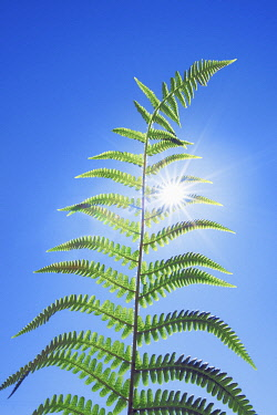 Fern and sun - United Kingdom, England, Cornwall, Saint Just, Porth Nanven