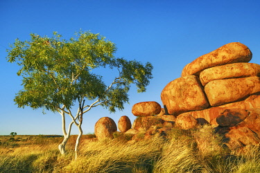 Rock formation at Devils Marbles with eucalyptus tree - Australia, Northern Territory, Devils Marbles