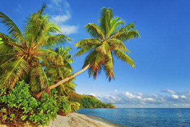 Coconut palm and sand beach - Seychelles, Praslin, Anse la Blague - Indian Ocean