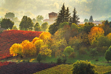 Castle and Vineyards in autumn, Castelvetro di Modena, Italy