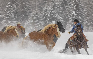 Cowboy during winter roundup, Kalispell, Montana