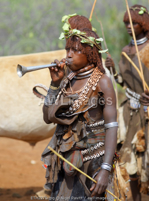 awl-images.com - Ethiopia / A Hamar woman blows a tin trumpet at a 'Jumping of the Bull' ceremony. The Hamar are semi-nomadic pastoralists of Southwest Ethiopia whose women wear striking traditional dress and style their red-ochred hair mop-fashion. Skins are widely used for clothing and heavy metal necklaces, bracelets and anklets form part of their adornments. The phallic protrusion of her choker denotes she is her husband's first wife. Cowries are also popular yet the sea is 500 miles from Hamar country.The 'Jumping of the Bull' ceremony is a rite of passage for young men. The climax to the ceremony in when the initiate leaps onto a line of ten or more of his family's bulls and runs along their backs; he must complete the feat twice in each direction. After the ceremony, the initiate attains full manhood and is permitted to marry.