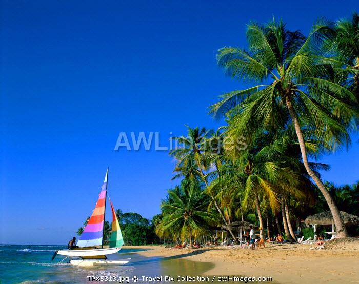 Kings Beach / Sand / Sea / Palm Trees, Barbados, Caribbean Islands