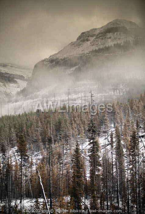 Kootenay National Park, The Rockies, British Columbia, Canada